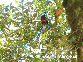 Quetzal_RioCristal